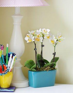 orquídeas-en-la-oficina
