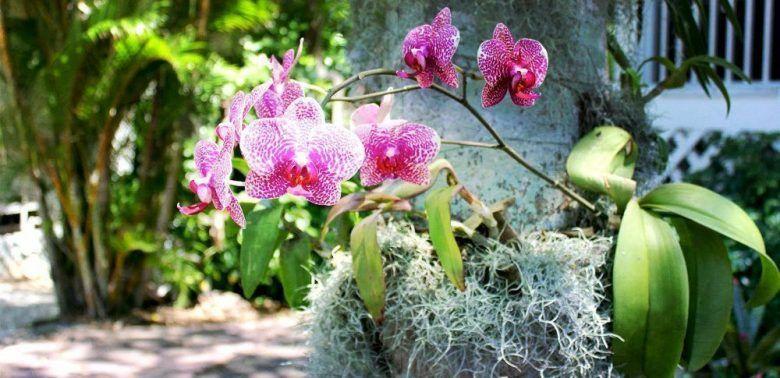 flor de orquidea rosa y raices