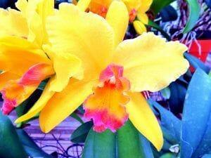 bonita flor de orquidea amarilla