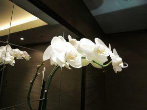orquideas blancas decorativas