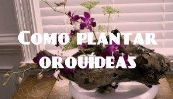 orquídea plantada en árbol