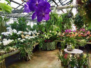criadero de orquideas, muchas variedades