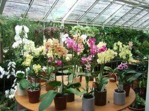 vendedor de orquídeas